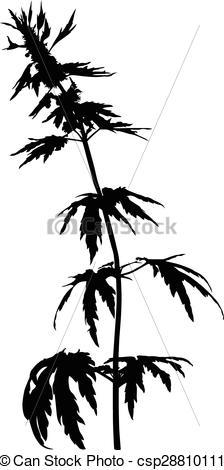 Vector Clip Art of Motherwort Leonurus flower.