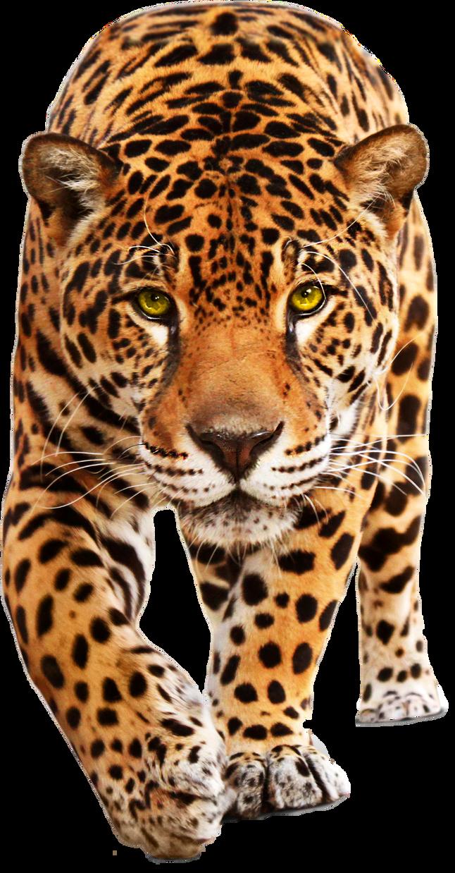 Walking Leopard PNG Clipart.