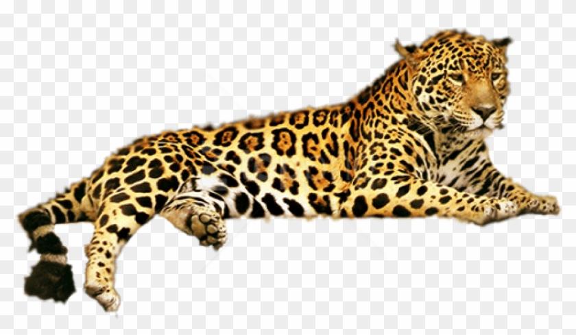 Free Png Download Jaguar Png Png Images Background.
