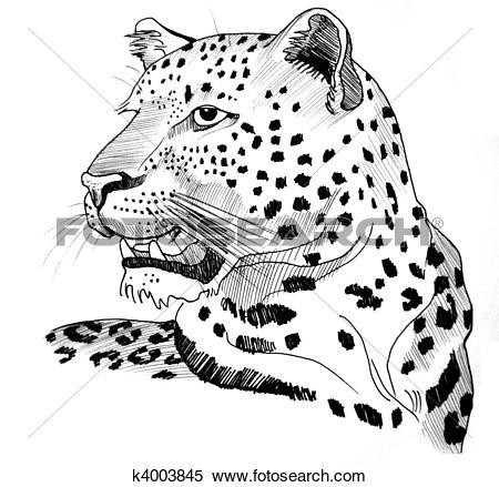 Stock Illustration of Leopard portrait k4003845.