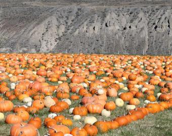 Items similar to Fall Harvest Leopard Print Pumpkins Vector.