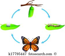 Lepidoptera Clipart and Illustration. 565 lepidoptera clip art.