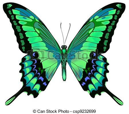 Lepidoptera Stock Illustrations. 1,169 Lepidoptera clip art images.