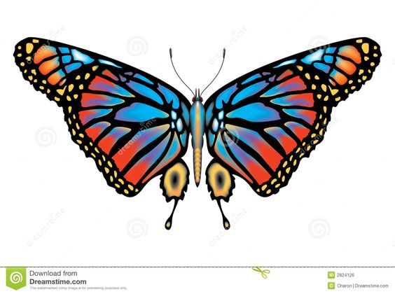 Lepidoptera Stock Illustrations, Vectors, & Clipart.
