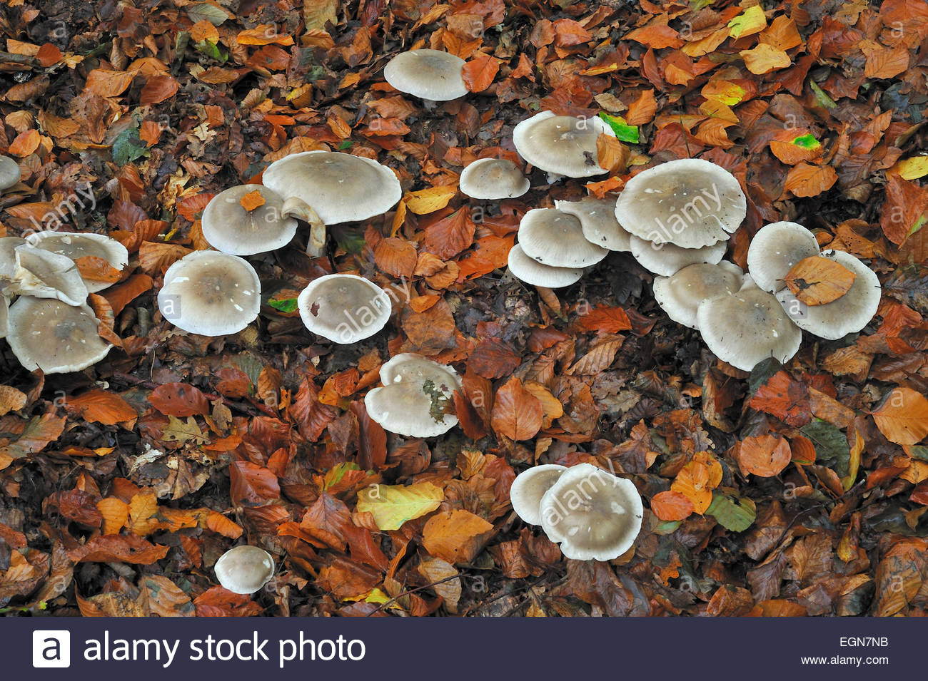 Fairy Ring Stock Photos & Fairy Ring Stock Images.