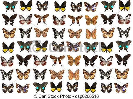 Pictures of lepidoptera butterfly background csp6268518.