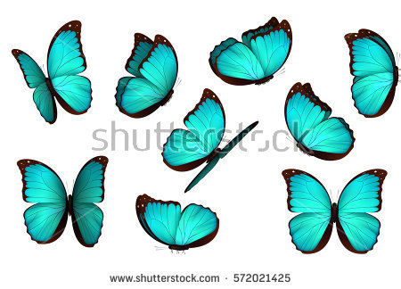 Lepidoptera Stock Vectors, Images & Vector Art.