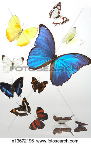Stock Images of Collection of eleven different butterflies.