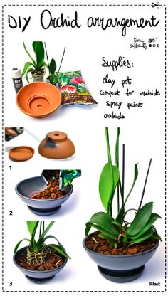 how to decorate the pots of orchids.