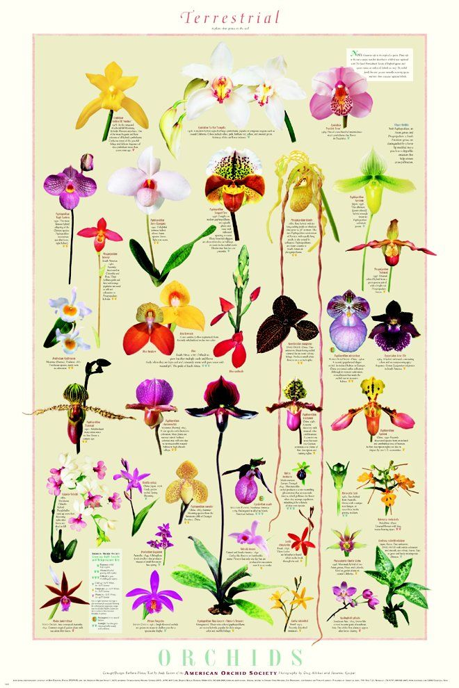 1000+ ideas about Orchid Types on Pinterest.