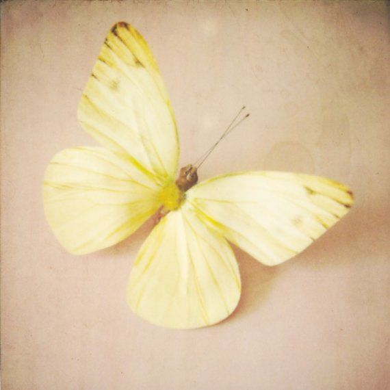 1000+ images about Butterfly on Pinterest.