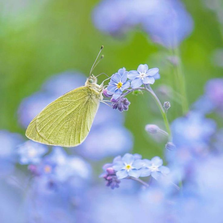 1000+ images about Yellow Butterfly on Pinterest.