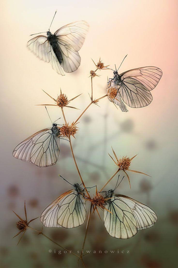 1000+ ideas about Butterfly Wings on Pinterest.