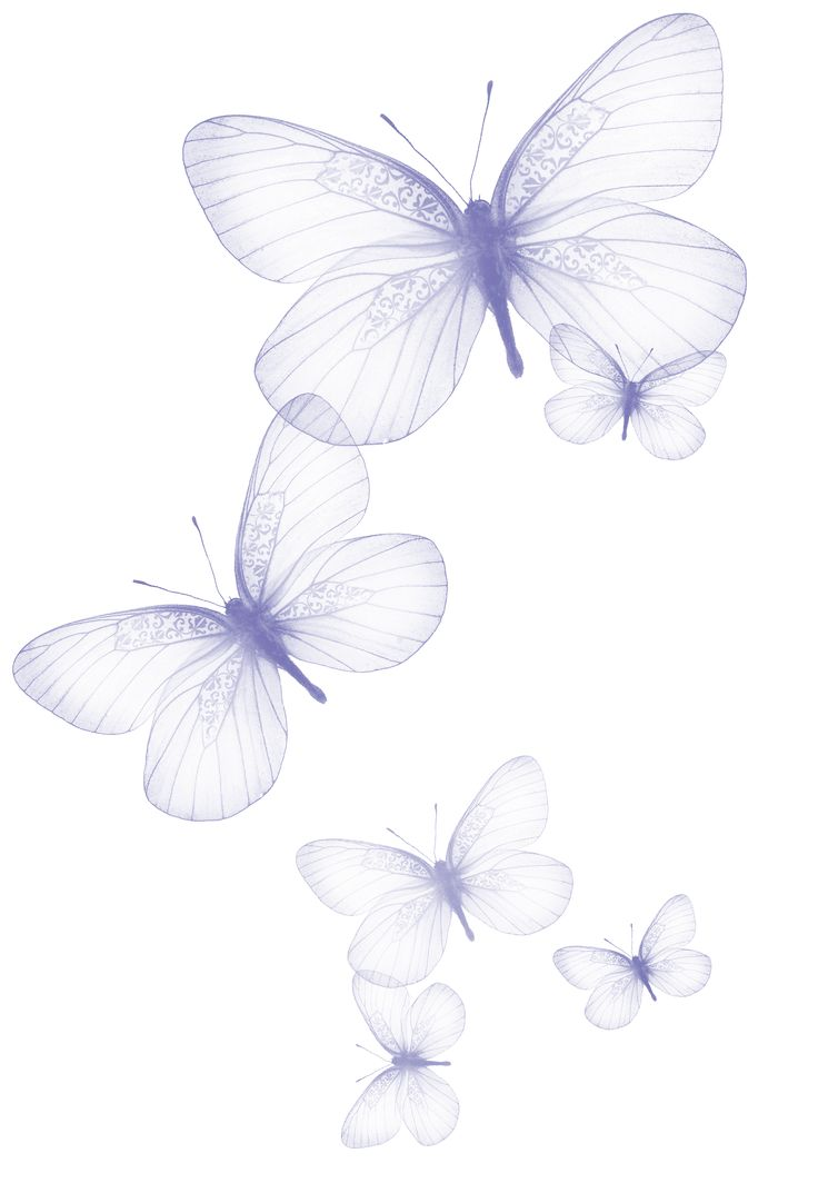 1000+ images about Butterflies on Pinterest.