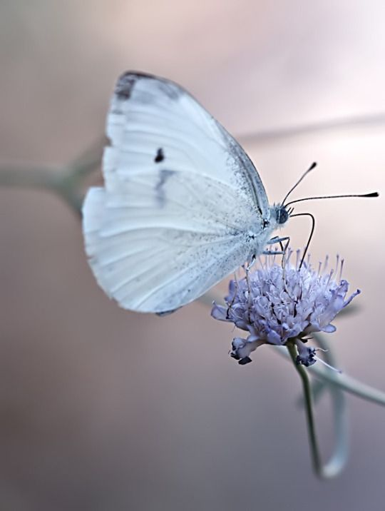 1000+ images about NATURE on Pinterest.