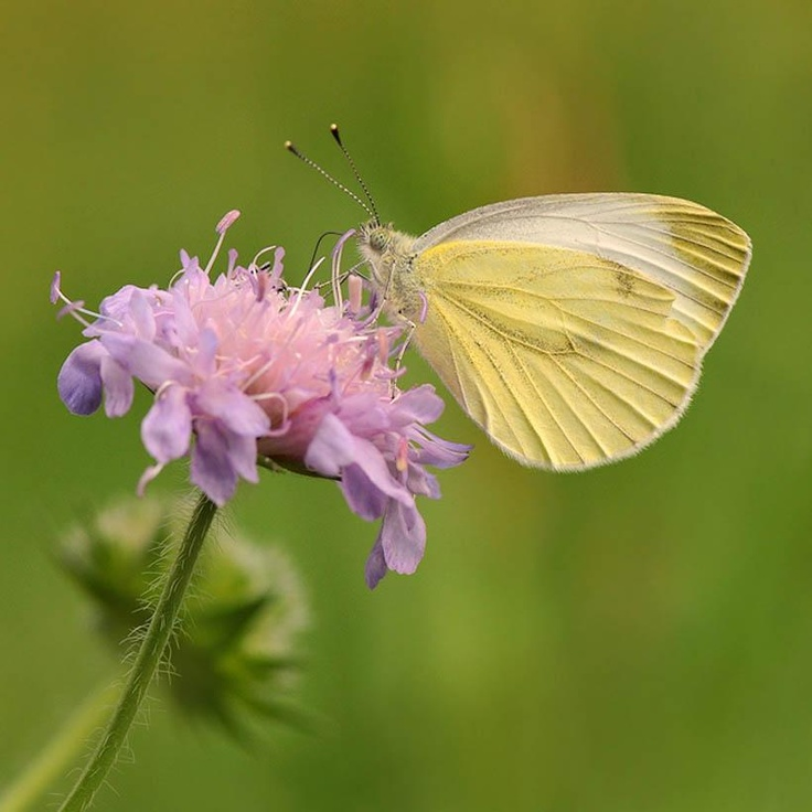 1000+ images about BUTTERFLY IS FREE on Pinterest.
