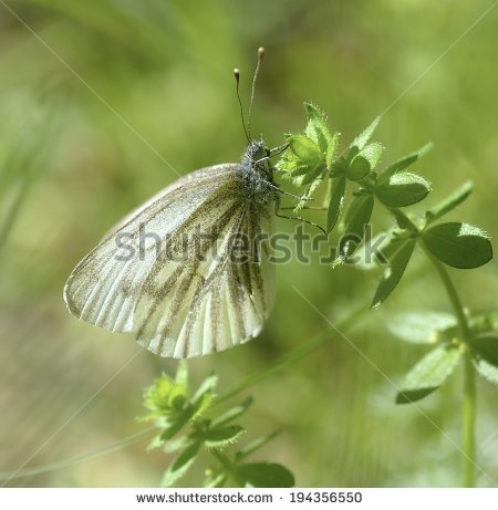 Woodland Moth Stock Photos, Royalty.