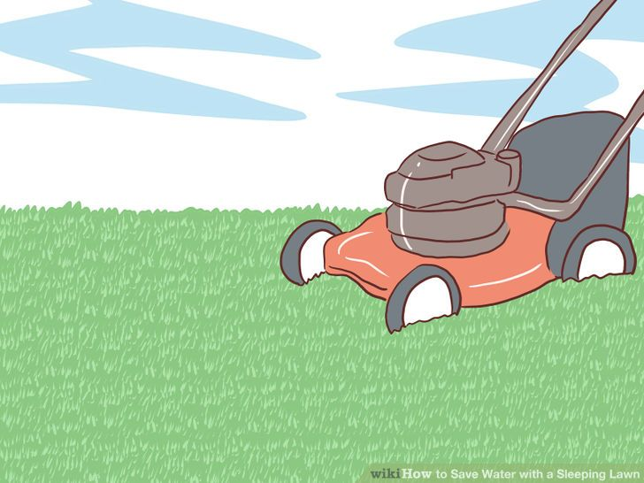How to Save Water with a Sleeping Lawn: 11 Steps (with Pictures).