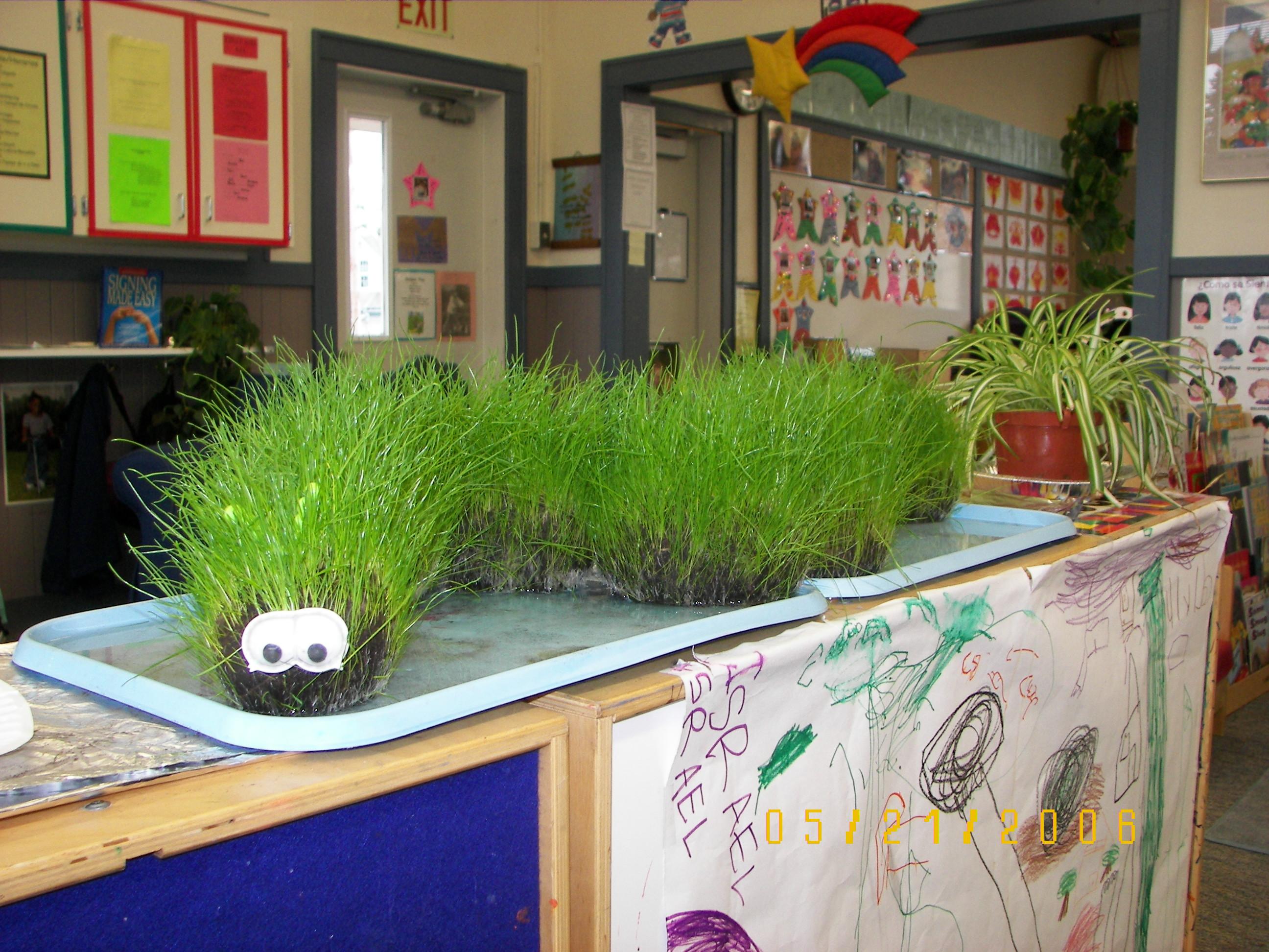 1000+ ideas about Cat Grass on Pinterest.