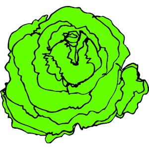 Lettuce Clipart & Lettuce Clip Art Images.