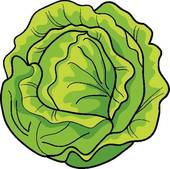 635 Lettuce free clipart.