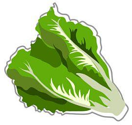 Free Lettuce Cliparts, Download Free Clip Art, Free Clip Art.
