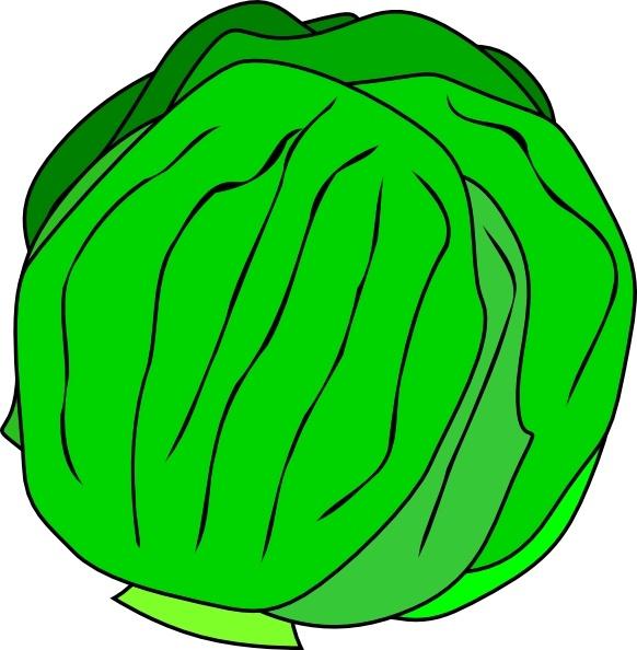 Whole Lettuce clip art Free vector in Open office drawing.