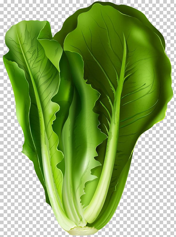 Lettuce sandwich Iceberg lettuce Leaf vegetable Romaine.