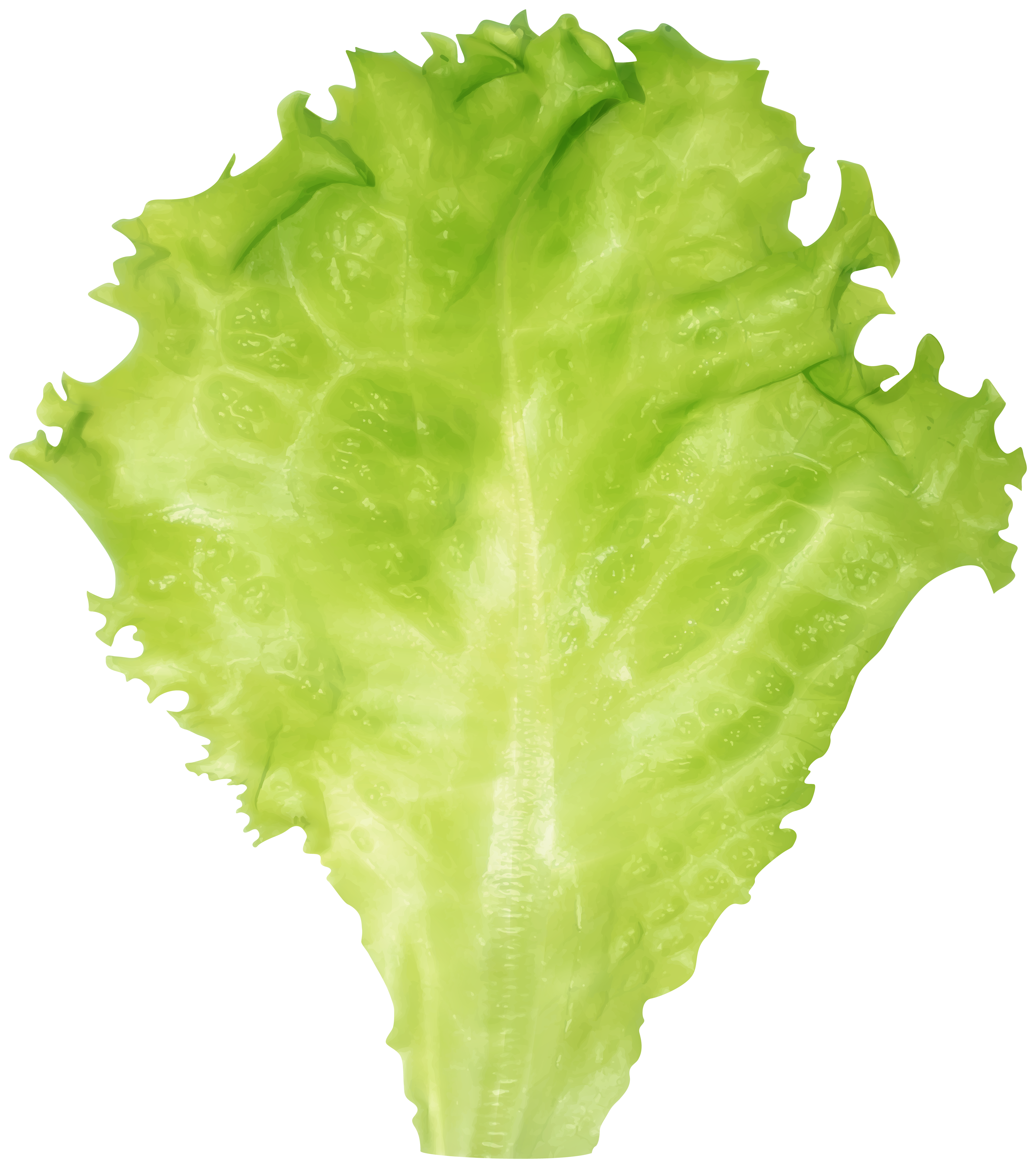 Lettuce PNG Clipart Image.