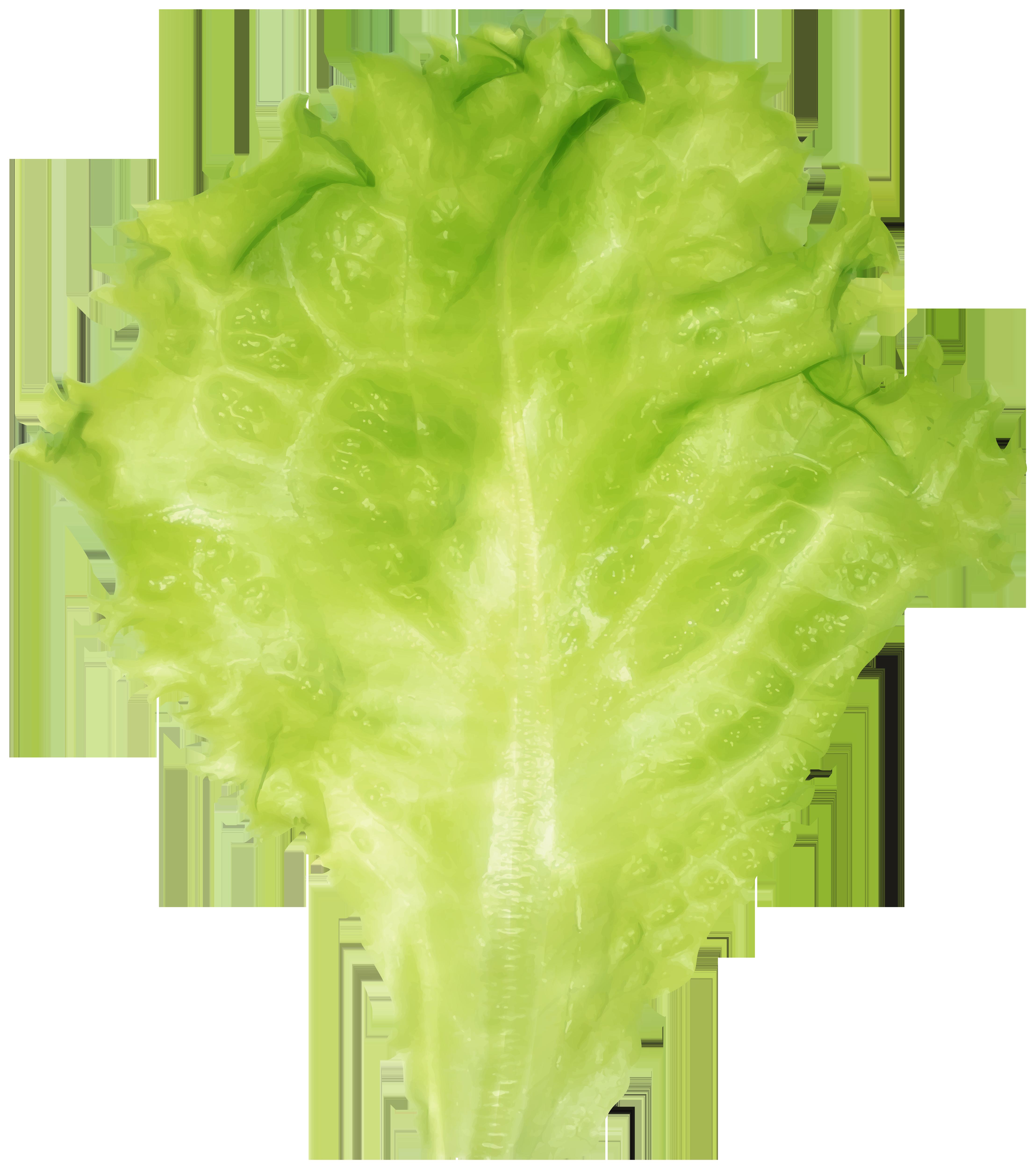Lettuce PNG Clipart Image.