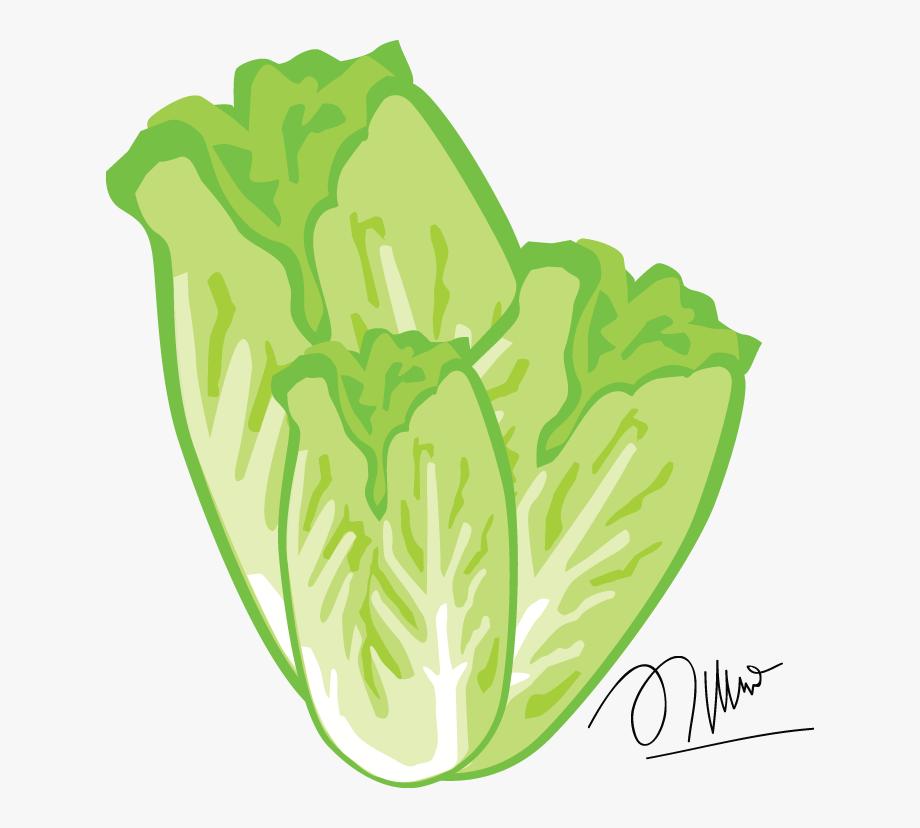 Lettuce Clipart Png , Transparent Cartoon, Free Cliparts.