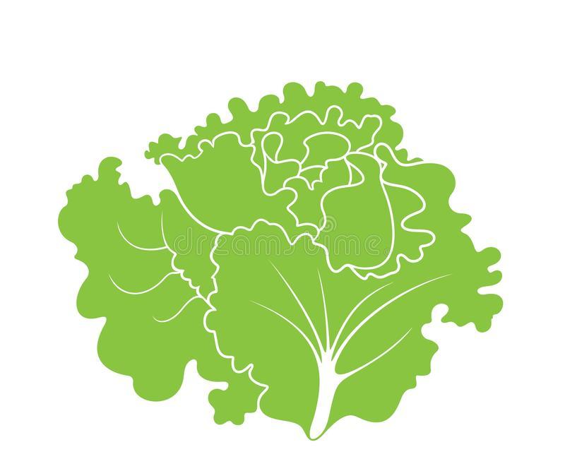 Lettuce Leaf Stock Illustrations.
