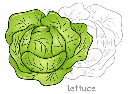 Lettuce leaf clipart 4 » Clipart Portal.