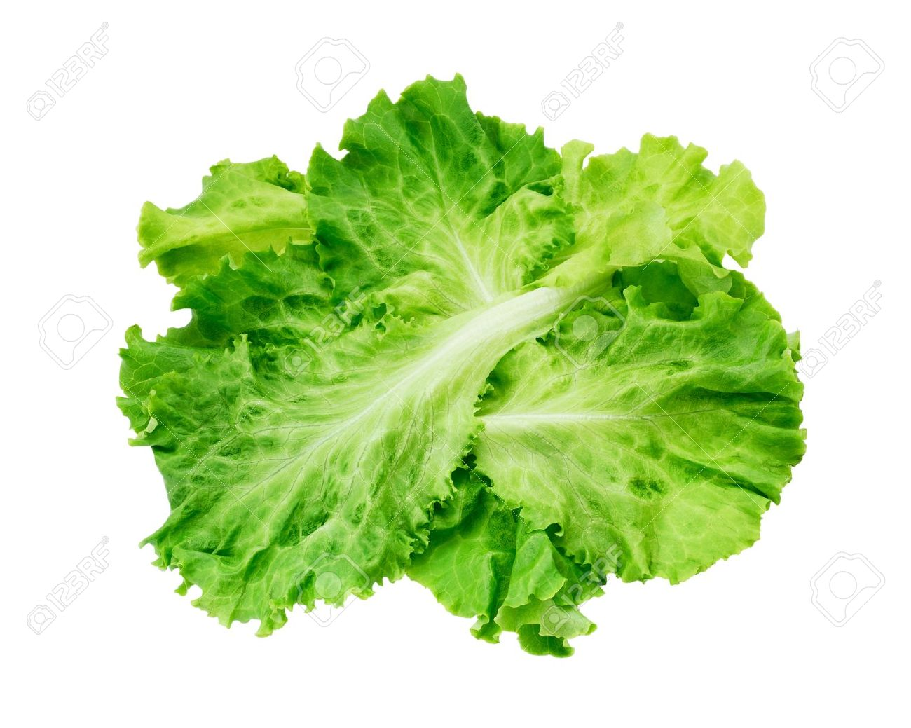 Clipart lettuce no background.