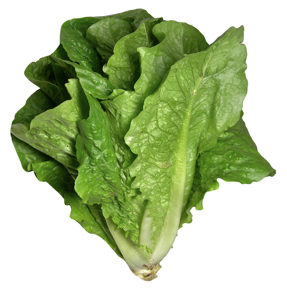 Romaine Lettuce PNG Image.