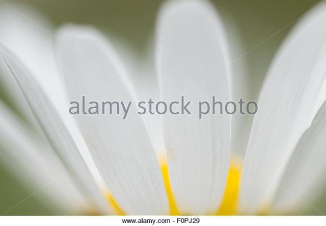 Asteraceae High Altitude Flora Stock Photos & Asteraceae High.