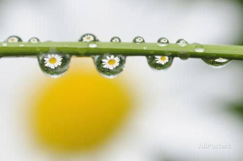 Multiple Water Droplets Related Keywords & Suggestions.
