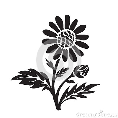 Leucanthemum Stock Illustrations, Vectors, & Clipart.