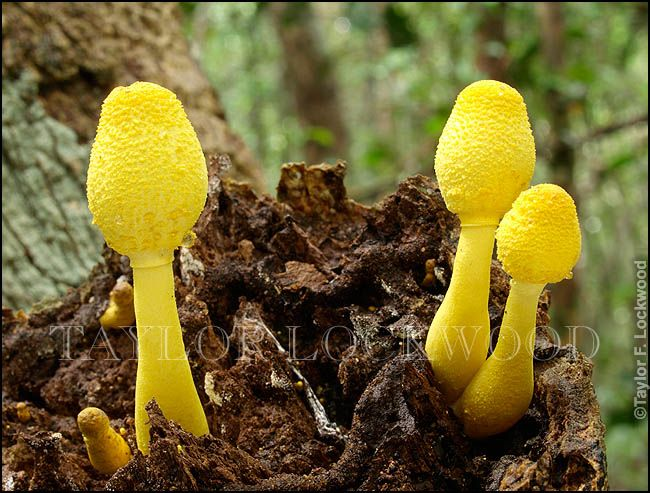 1000+ images about Nature: Mushrooms on Pinterest.