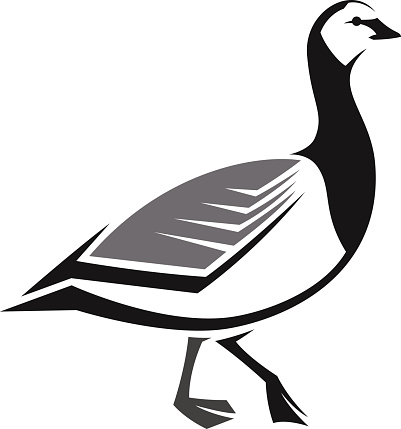 Branta Leucopsis Clip Art, Vector Images & Illustrations.