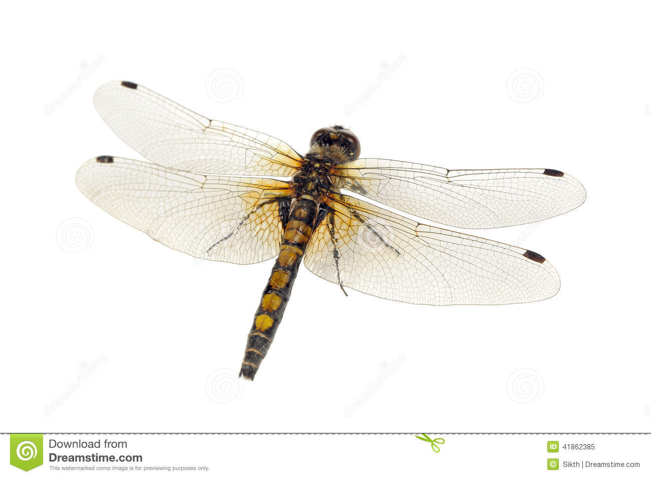 Dragonfly (Yellow.