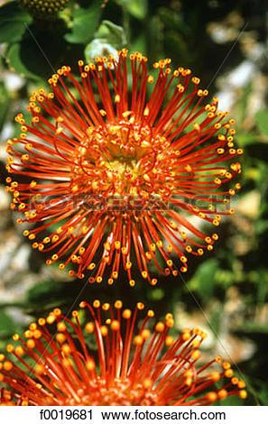 Stock Photography of South Africa, Stellenbosch garden.