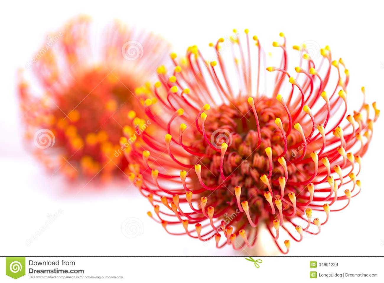 Vivid Flower Stock Photos.