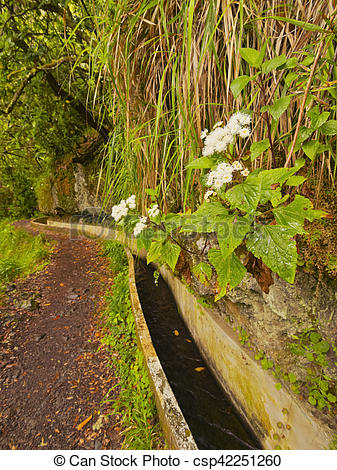 Stock Image of Levada on Madeira.