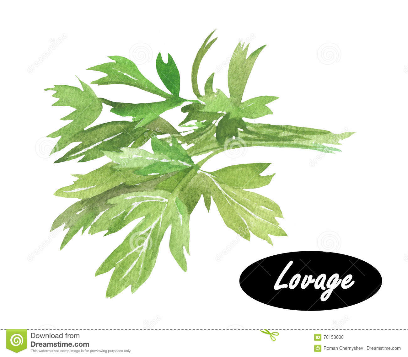 Watercolor Illustration Of Lovage. Levisticum Officinale. Stock.