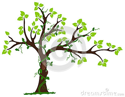 Tree With Liana And Vine Royalty Free Stock Image.