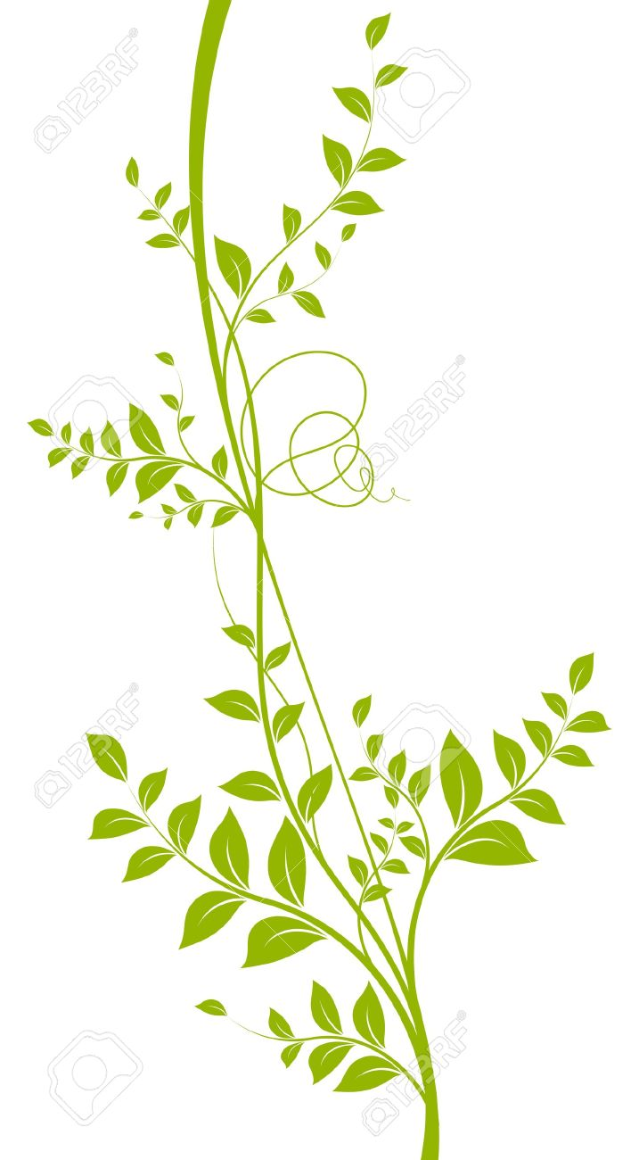 Vector Decorative Element Green Liana With Leaves Over A White.