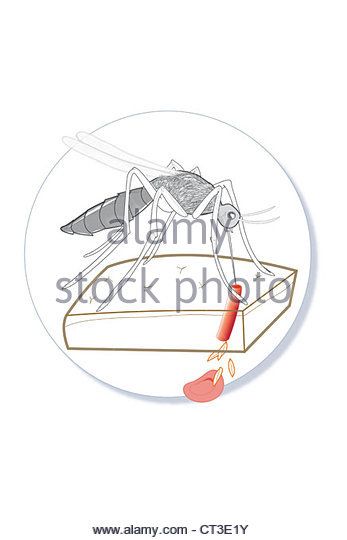 Plasmodial Stock Photos & Plasmodial Stock Images.
