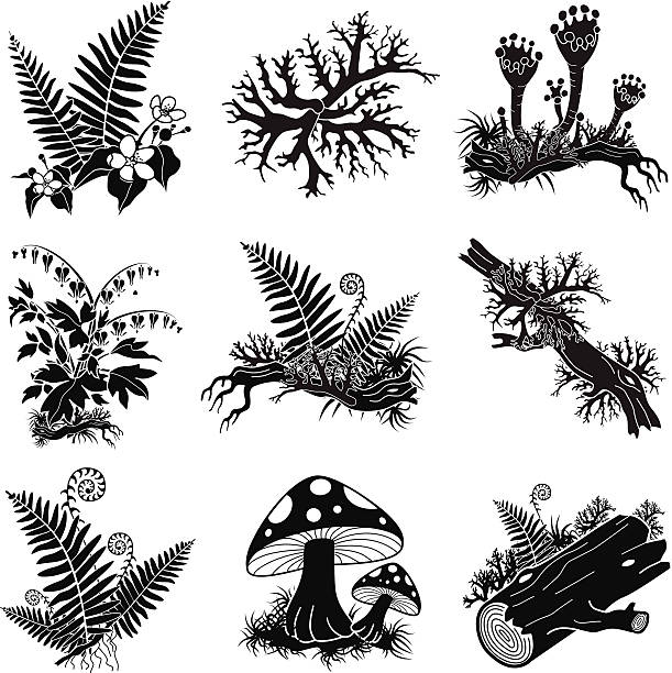 Thallus Clip Art, Vector Images & Illustrations.