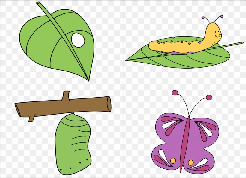 Butterfly Biological Life Cycle Caterpillar Clip Art, PNG.